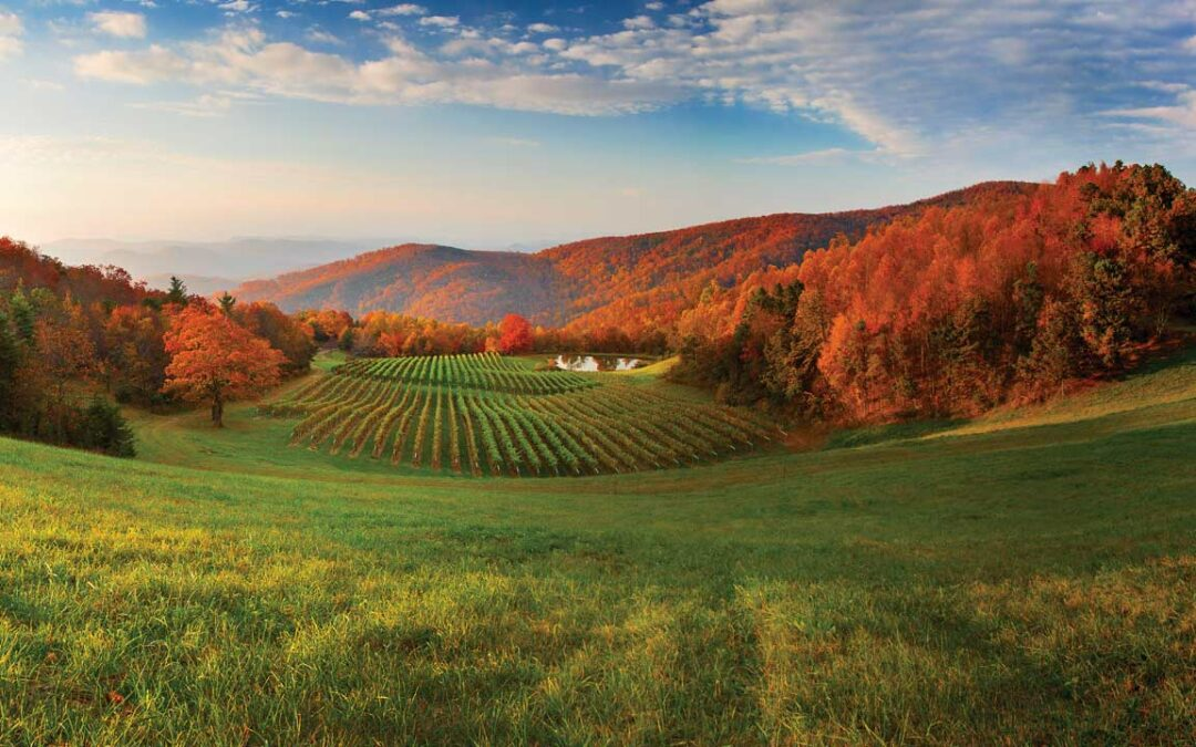 Wine Touring: Tasting the Crest of the Blue Ridge